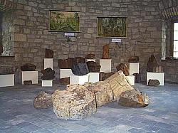 """Museum """"Petrifiet woodt"""""""