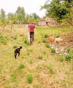 Farma Létající koza