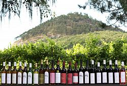 Wine-growing Chrámce